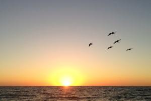 Floridai nyár – csendélet öt pelikánnal